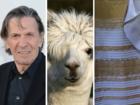 Internet whiplash: Llamas, the dress, Nimoy