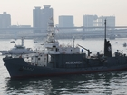 What is the future of Japanese whaling?
