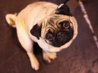 Ohio AG warns of puppy breeder scam