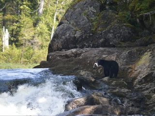 Great Bear Rainforest will be protected