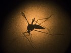 Brazil and U of Texas reach deal on Zika vaccine