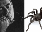 Tarantula species named after Johnny Cash