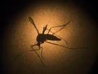 Zika cases might have come from Florida insects