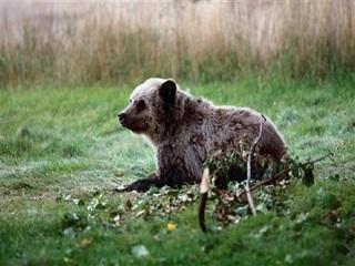 Officials hunt for bear that killed biker