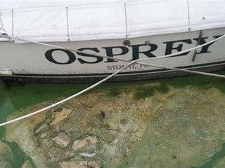 Thick, green algae impacting Florida waters