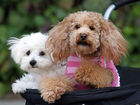 6 ways to prep your dog for fireworks