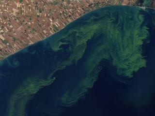 Algae beer puts focus on Lake Erie's water woes