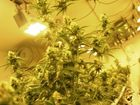 This could bring down Ohio's medical pot program