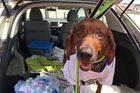Arizona dog over 2,000 miles away was found